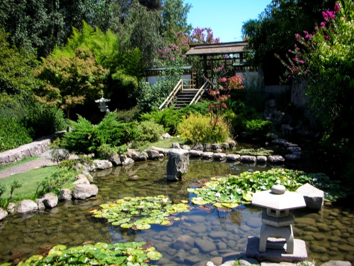 pond-in-japanese-garden
