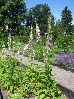 linnaeus-garden-in-uppsala-6-copy
