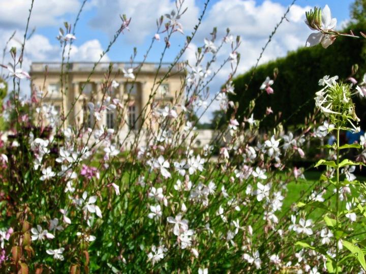 Versailles (40) copy